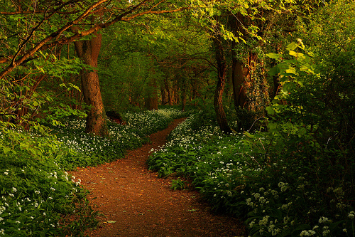 Wild Garlic Wood, Lancashire, England photo by stevethompsonimages