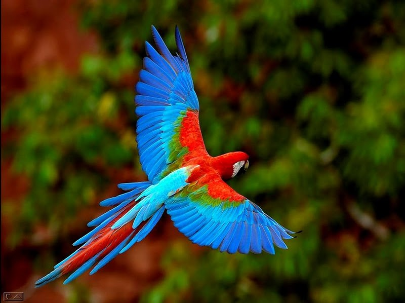 Birds and Animals Awesome Photos (2)