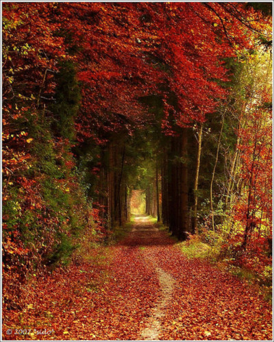 Tree Tunnel, Bavaria, German photo via whimsicalraindropcottage