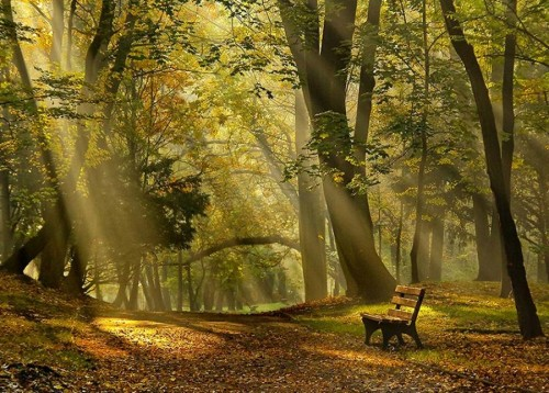 Forest Light, Foxely woods, Great Britain