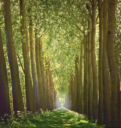 Tree Tunnel, Bruges, Belgium