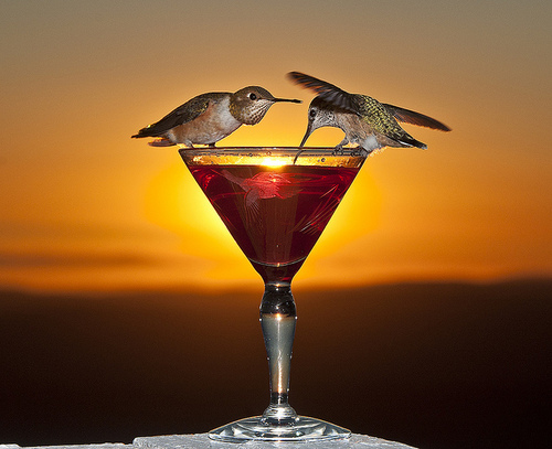 Hummingbirds at Sunset with Wine Glass